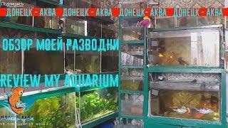 обзор моей разводни, как и где я развожу аквариумных рыбок, akvaariumi kalad, aquarium fishes