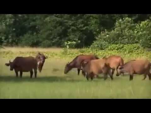 Gabon Trip Video