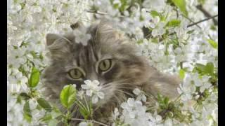 Скачать Flёur Теплые Коты