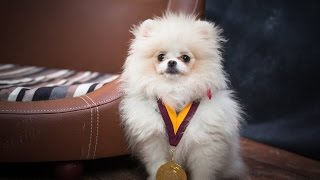 Lily - Pomeranian Puppy - 4 Weeks Residential Dog Training