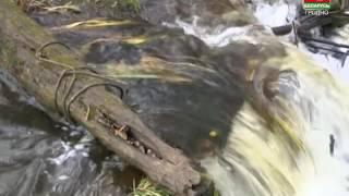 Новость от 04.11.2016. Госконтроль и водоемы Гродненской области