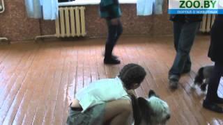 Ребенок и собака (9-12 лет)