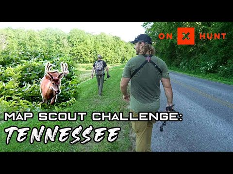 Intense Ridge Bedding | Hunting Public Deer CLOSE TO THE ROAD! | Land Between The Lakes Tennessee