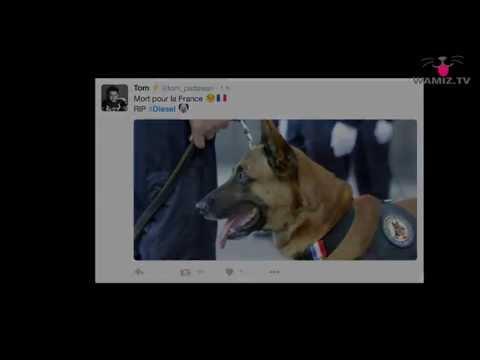 Attentats de Paris: hommage à Diesel, chien policier tué pendant l'assaut à Saint-Denis