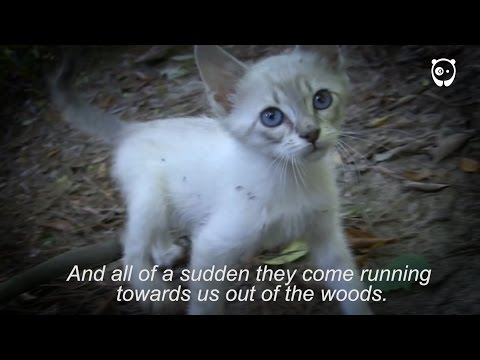 Hike ends with surprise kitten rescue