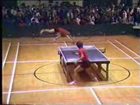 Tischtennis Profi