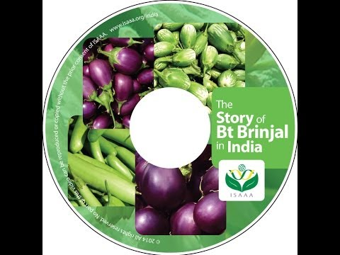 """Bt Brinjal  Video """"The Story of Bt Brinjal in India"""""""