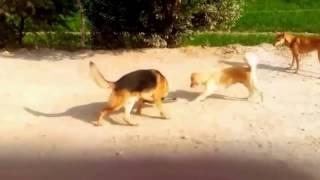 Самых удивительных диких животных, нападение гигантской Анаконды Змеи против собаки против Питбуля п