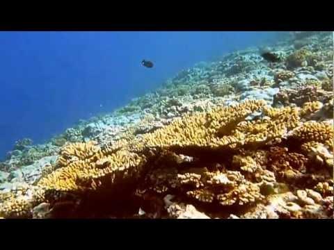 Promenade sous-marine à Maupiti - Polynésie française - Submarine walk - French polynesia