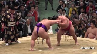 2017大相撲大阪春場所での大栄翔 vs 貴景勝の取組。