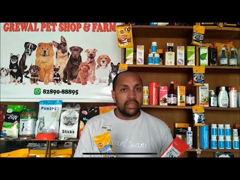 Pet Care - How to Make Your Dog Smell Better - Bhola Shola