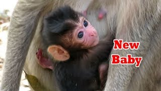 Newborn Baby 2019,Lovely Baby Monkey Is Cute and Beautiful