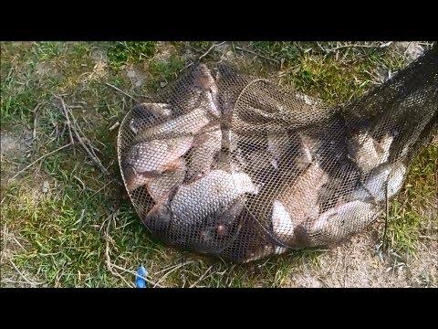 Вот ЭТО улов. Надергали с соседом карасей полный садок. Рыбалка 2018