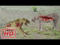 Top 10 Craziest Animal Attacks - Lion, Jaguar, Leopard, Anaconda, Snake, Buffalo - 2017