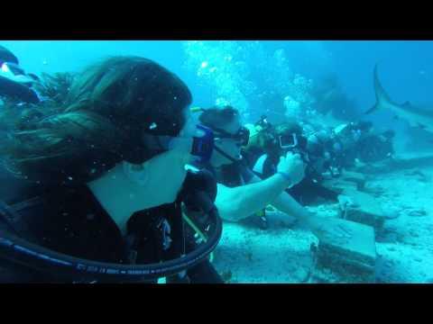 Ocean Explorers Shark Dive 2   St Maarten   Jan 2016