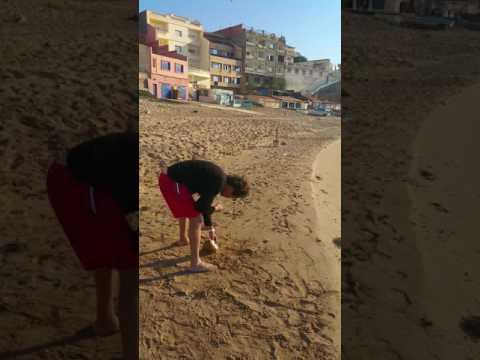 Dorada 1'8kg bousfer plage