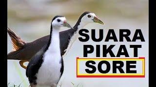 Download Mp3 Suara Pikat Ruak Kusus Sniper Hetsot