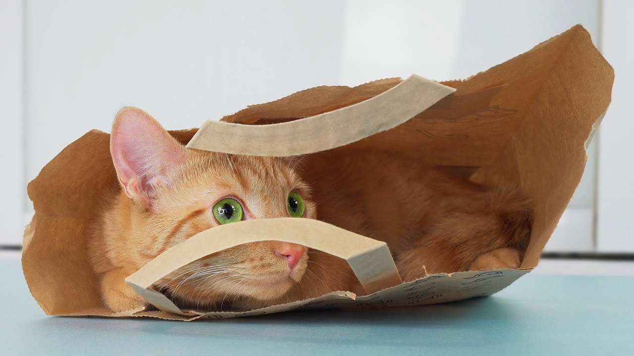 Кот в пакете, как моллюск в панцире)
