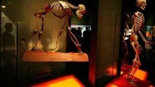 Peter Singer (II) Speciesism & Animal Rights