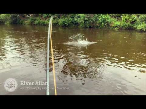 Fishing Around The Forth - Allan Water Angling Improvement Association - Allan Water