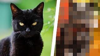 7 Jahre nachdem er die Katze adoptiere, passierte das Unglaubliche!