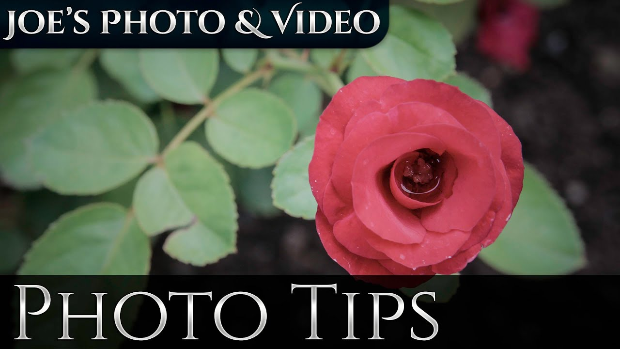 Color Effect On Mood how does color effect the mood of your photos | photography tips