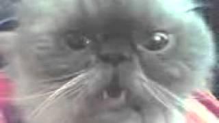 Кот бля