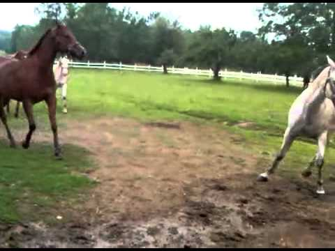 Funny Horses Running Like Crazy | Funny Horse