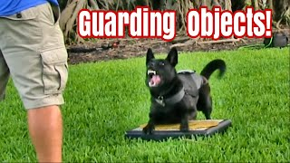Teaching Dogs to Guard Objects and People