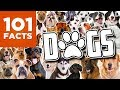 101 Facts About Dogs