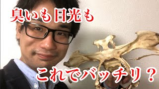 サメの頭骨や顎骨作成の時に役立つ意外なものを紹介!! 乾燥させるときに◯◯がオススメ?