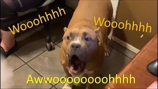 Funny Dog Howling Compilation 2019