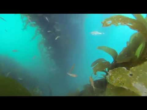 Free Diving in Malibu, California #02
