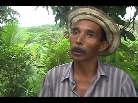 Permacultura tropical en Panamá. 2/3