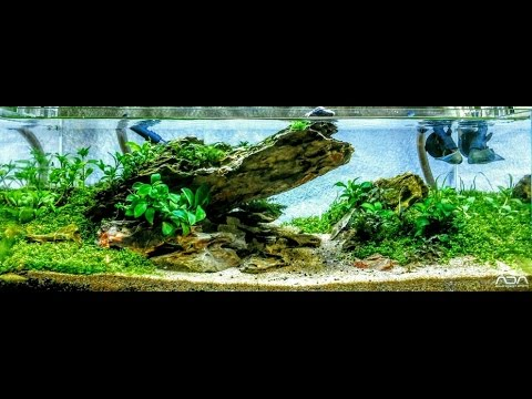 Low Tech ADA 45F 4.2 gallon Aquascape Step By Step Outside ...
