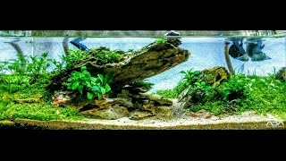 low tech ada 45f 4 2 gallon aquascape step by step outside