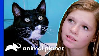 Can This Aspiring Vet Control Her Cat's Territorial Impulses? | My Cat From Hell