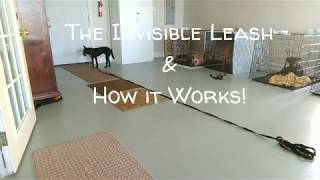 Dog Training With the E Collar - The Invisible Leash and How It Works