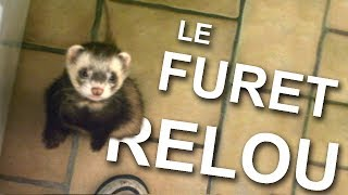 LE FURET RELOU -  PAROLE DE CHAT
