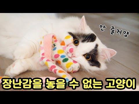 장난감을 놓을 수 없는 고양이의 사정 🔞