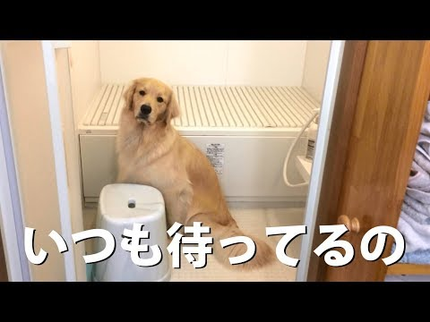 一緒にお風呂に入りたいわん My honey waiting for shower..but you already done.