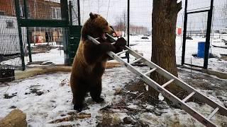 Медведь похож на электрика? Когти есть, лестницей пользуется...