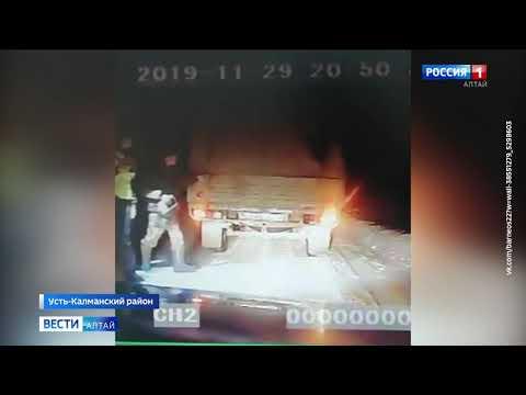 На алтайской трассе сбитая косуля пришла в себя и напугала полицию