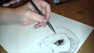 Speed Drawing - Barn Owl