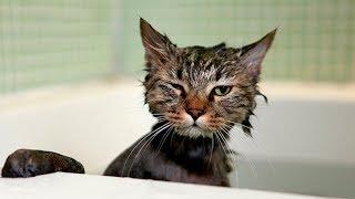Приколы с котами и кошками — Смешные коты и кошки 2017 🐈 КОТЫ ПРИКОЛЫ 2017 #1 котики приколы