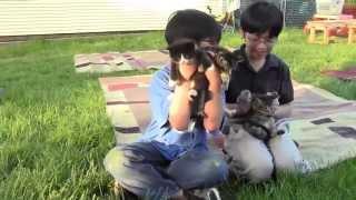 Aiman & Hizami Memperkenalkan Kucing2 Mereka (Versi Bahasa Melayu)