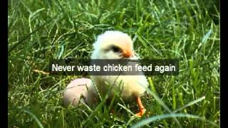 Chicken Feeders | Hens | Modoc | Ca | Automatic Chicken Feeder | Feeding Chickens | Poultry Feeders