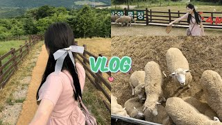 [Vlog] 강릉여행브이로그 2탄(대관령삼양목장, 강릉…