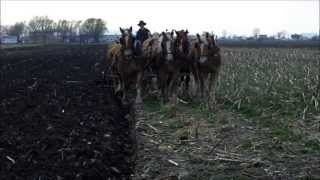 Amish Plowing with a Seven Horse Hitch