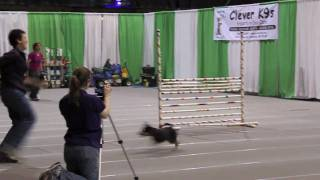 Wbay Pet Expo, High Jump Competition